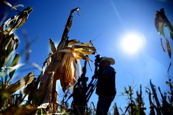 Seguro Rural: CONAB inicia fiscalização de propriedades beneficiadas