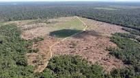 Professor de Harvard - 'Quem vai invadir o Brasil para salvar a Amazônia?'